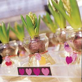 Hyacinten op glas